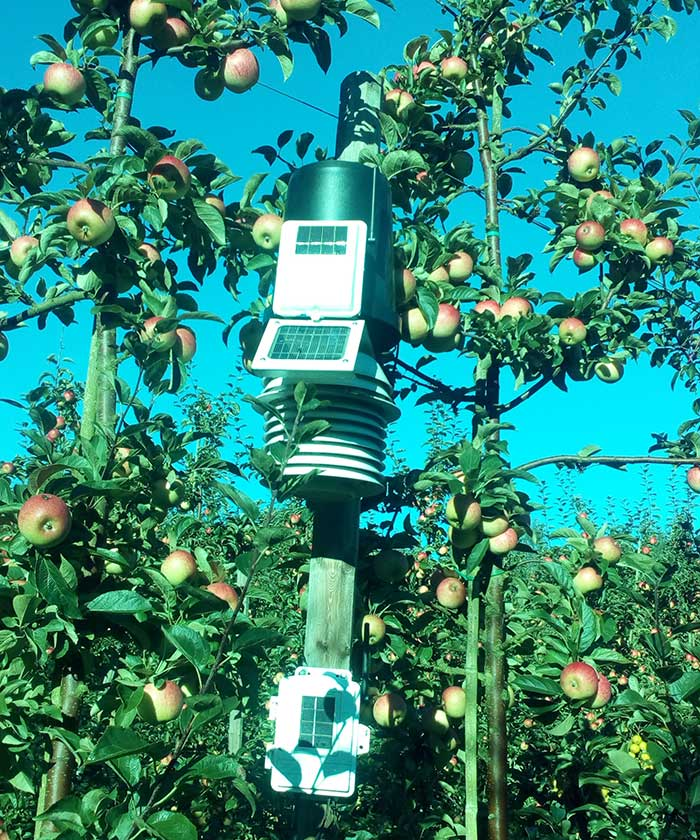 Äppelodling i Skåne med väderstation