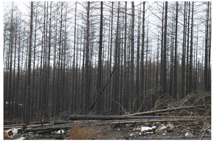 Brandskadad skog